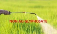 Interdiction du glyphosate