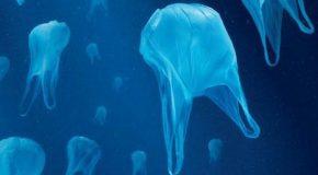 Produits de la mer : des microplastiques dans votre assiette